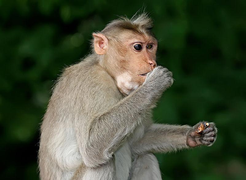 Engels: de rol van de arbeid in de overgang van aap naar mens