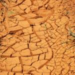Extreem weer laat zich voelen: uitzonderlijke droogte